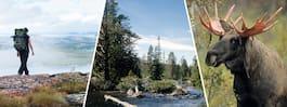 Här är Sveriges 13 finaste nationalparker
