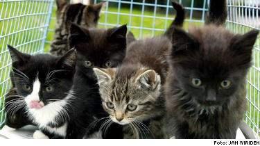 Flickan fick äkta kokoppor, en virussjukdom som det bara finns fyra väldokumenterade fall av i Sverige. Hon smittades av sina kattungar (katterna på bilden är inte flickans).