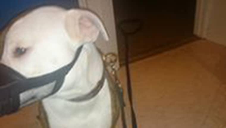 Efter att Veronica Klein förstod vad som hänt hennes hund Rex blev hon förbannad. Foto: Privat
