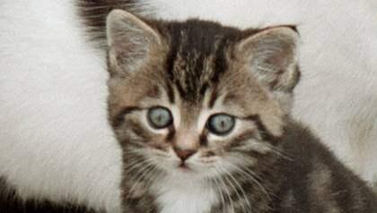 Kattungen på bilden är inte samma som i artikeln. Foto: Lasse Svensson