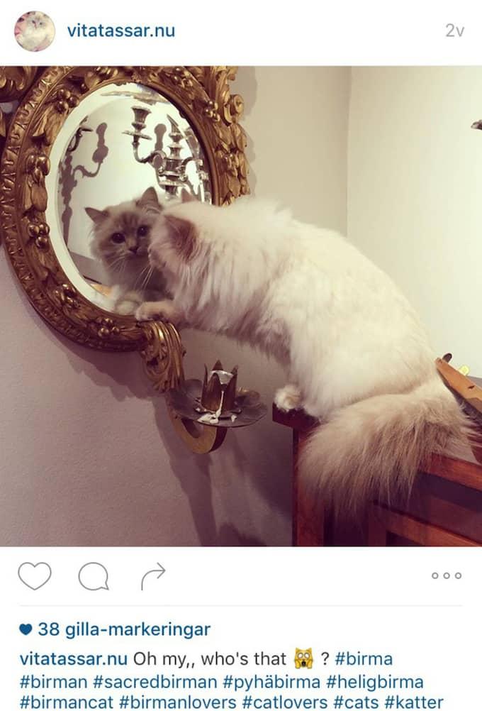 Här är spegel-bilden på Instagram-kontot den tillhör... Foto: Instagram