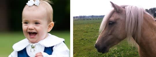 Här är Estelles nya häst Gullvida. Foto: Hovet
