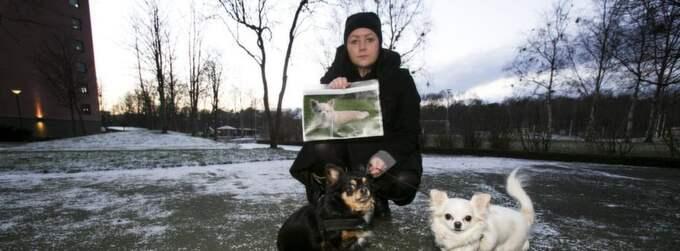 Matte Lizette Jonsson och två av hennes hundar saknar kompisen Wilja som blev bortrövad vid ett brutalt överfall i helgen. Foto: Jan Wiriden