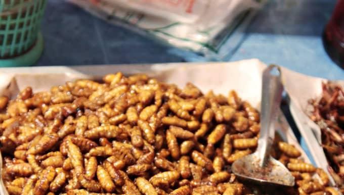 Proteinrikt. Torkade larver innehåller 53 procent protein, 15 procent fett och 17 procent kolhydrater, uppger Svenska Yle.fi. Foto: Colourbox