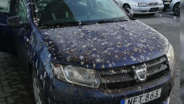 De hittade bilen – som var täckt av fågelbajs