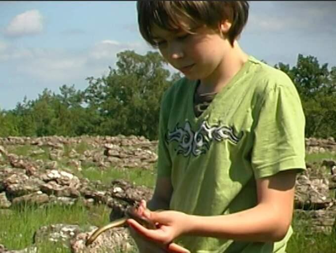 Jim har hittat en hasselsnok. Nu har han sett alla de svenska ormarterna.