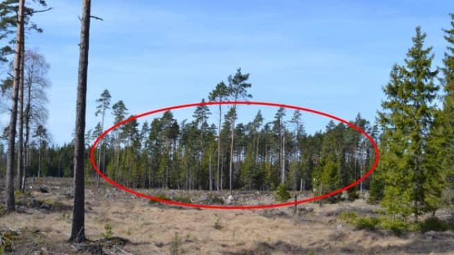 I det här skogsområdet bands mannen fast och misshandlades. Foto: Polisen