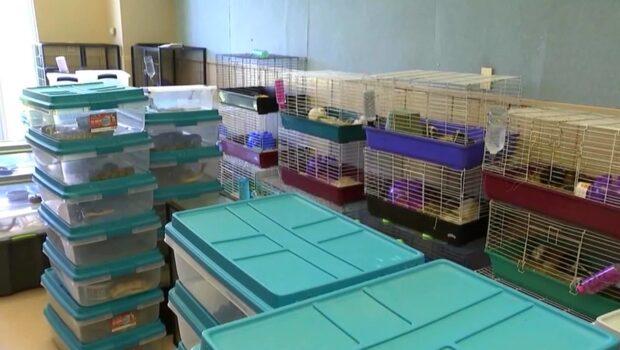 Polisen hittade 250 ormar, alligatorer och skunkar i villa