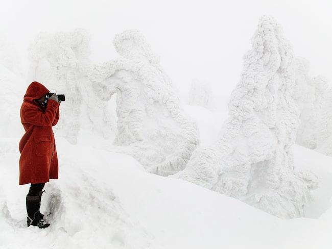 Det finns många olika snöiga sevärdheter i Aomori.
