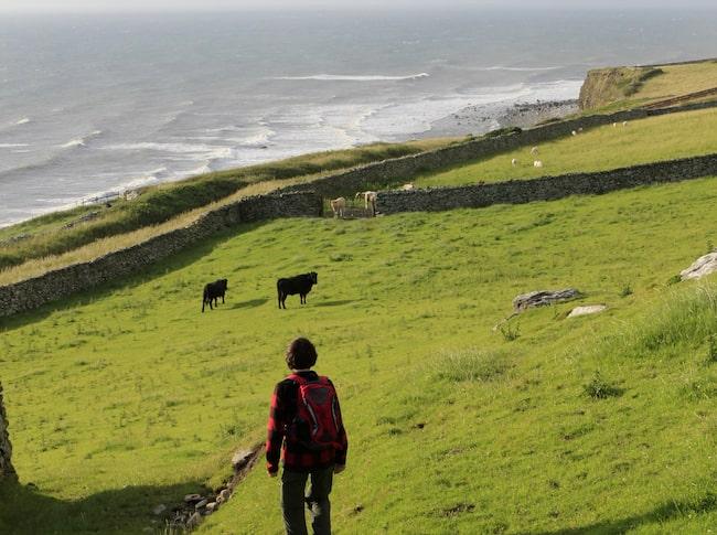 Wales Coastal Path sträcker sig längs med den 140 mil långa och dramatiska kusten.
