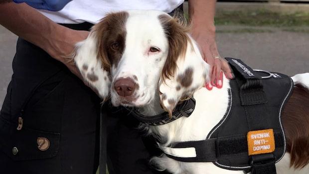 Möt Molly, världens första dopinghund