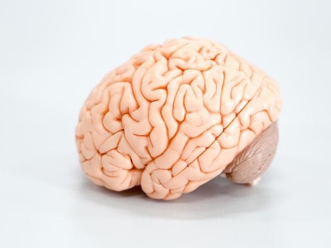 Forskning från USA visar att kvinnors hjärnor är mer aktiva än mäns.