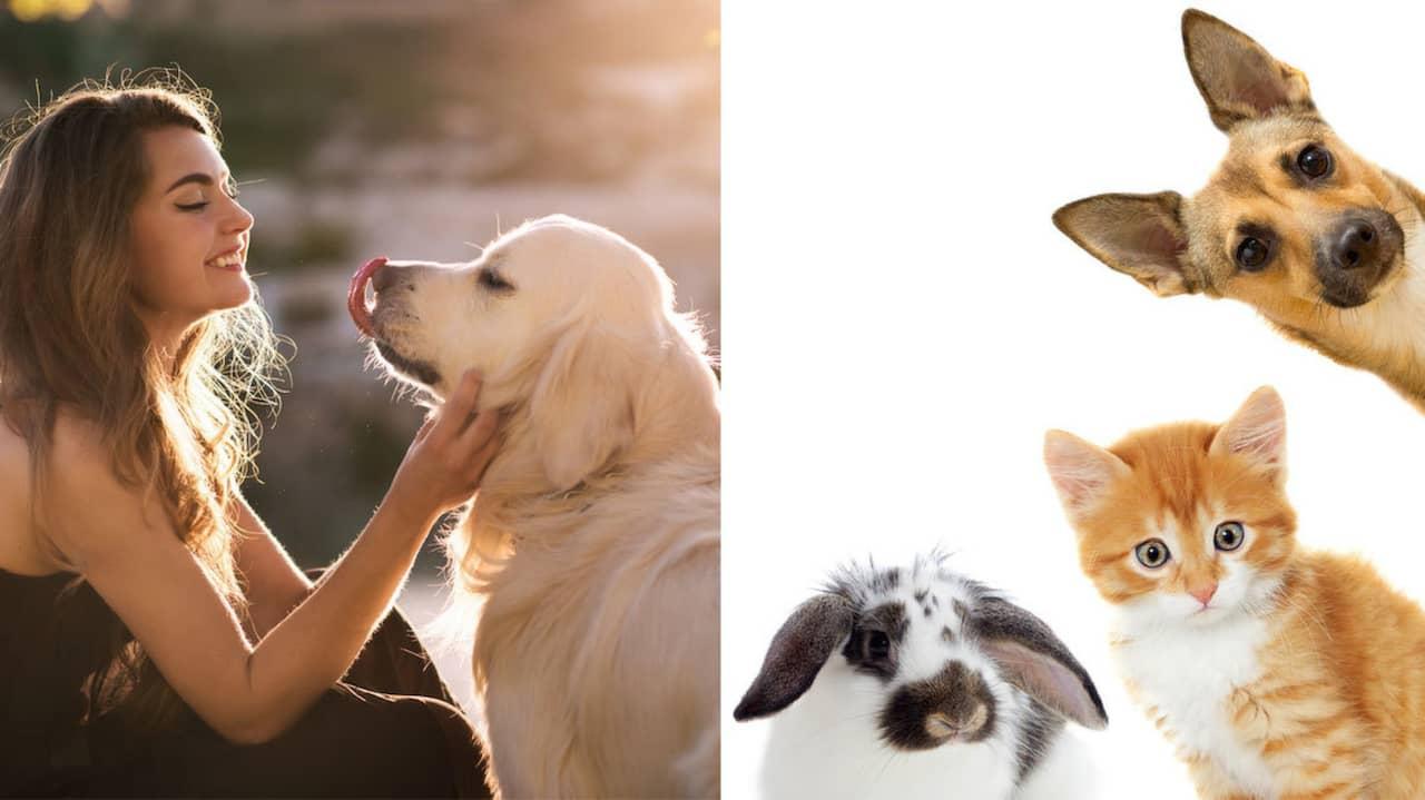 Overvikt gor husdjur deppiga