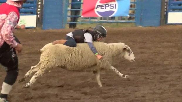 Se femåringen slå rekord i fårridning