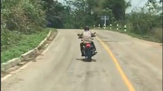 Sjuka videon: Orm attackerar mc-kille – medan han kör