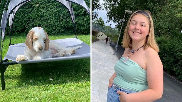 13-åriga Mira driver hunddagis på sommarlovet