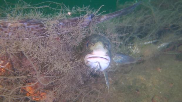 Se bilderna från havets botten där fiskarna svälter ihjäl