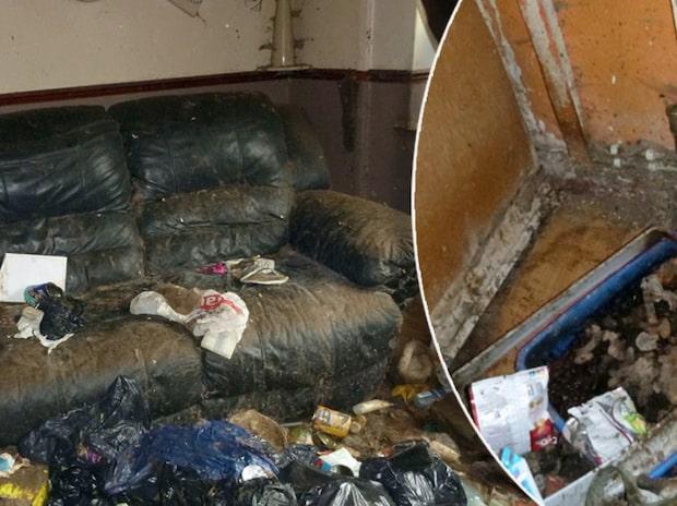 Döda katter hittades i extremt smutsigt hem