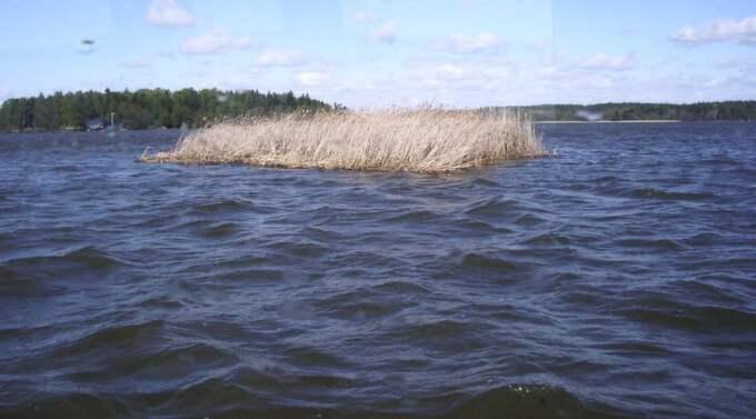 """Om vattnet i Mälaren ska vara drickbart måste åtgärder sättas in nu. """"Den ökade sjöfarten, kemikalierna och övergödningen gör att jag på sikt inte tror att Mälaren kommer att duga som dricksvattentäkt"""", säger Lennart Gladh på Världsnaturfonden. Foto: Lennart Lindquist"""