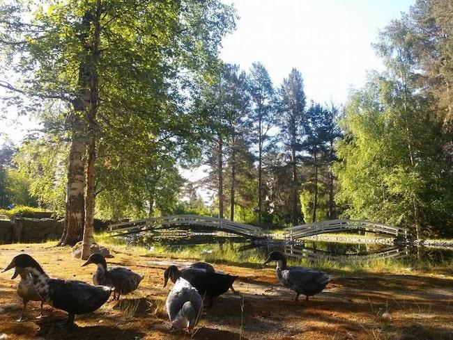 Djurparken ligger i Junsele.
