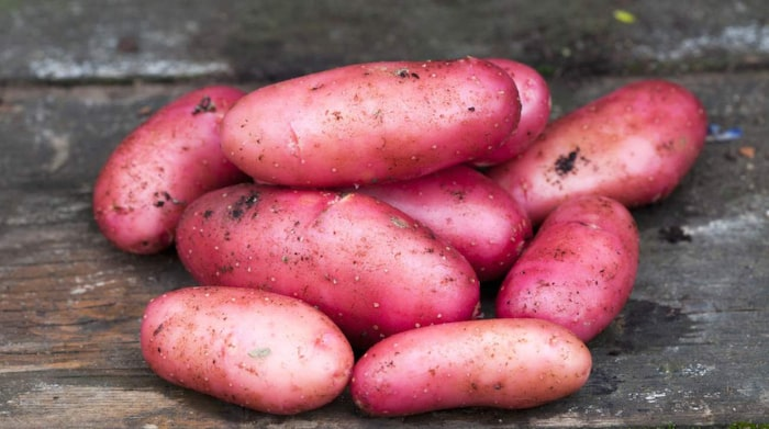olika sorters potatis