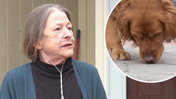 Hunden Sundance hjälper sjuka grannen att handla