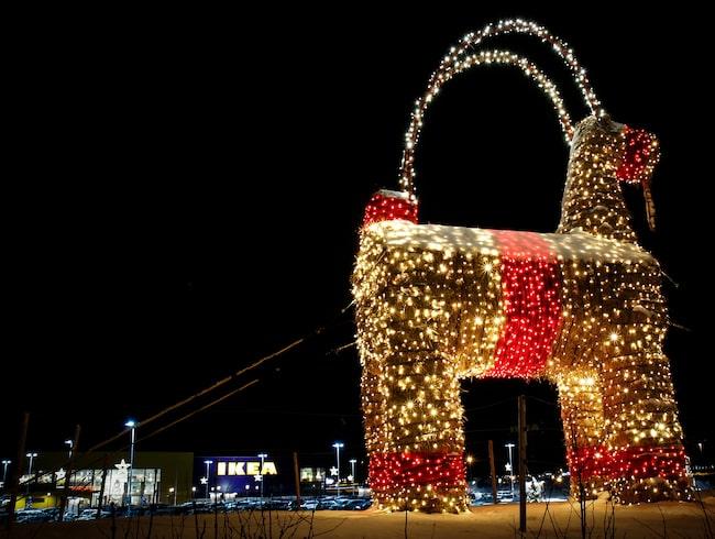 Den 17 oktober reste Ikea julbocken på Island.