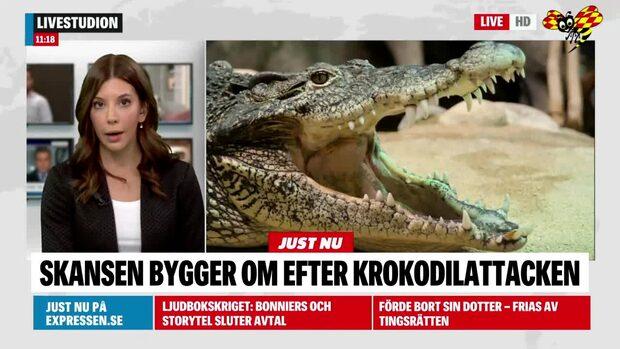 Man biten av krokodil på Skansen