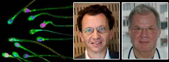 VARNAR. Aleksander Giwercman och Stefan Arver varnar för att om forskningen om andrologin läggs ned äventyras mäns hälsa.