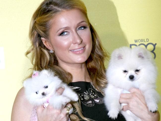 2009 lät hon bygga ett hus till sina hundar för ungefär 2,5 miljoner kronor.