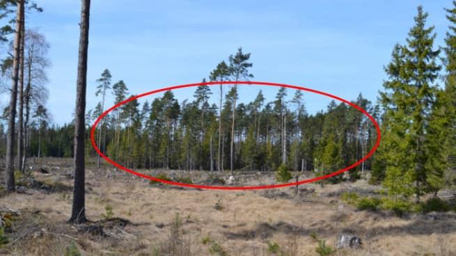 Mannen hade lämnats fastbunden vid ett träd långt ut i skogen. Det var nollgradigt och han hade inga ytterkläder. Foto: POLISEN