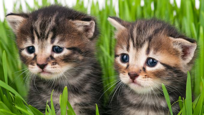 Ledsna och fattiga katter. Foto: Colourbox