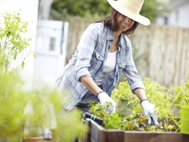 Att odla i pallkrage är både lätt och roligt.