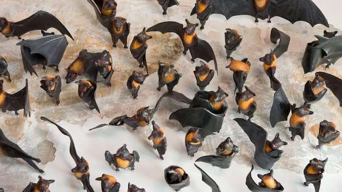 "Serena Carones ""Cent chauves-souris"" (Hundra fladdermöss). Foto: BÉATRICE HATALA"