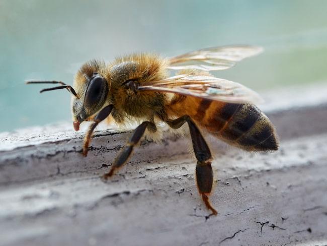 ... men samtidigt kommer alla insekter och vill in i ditt hem. Dock finns ett superknep för att slippa dem!