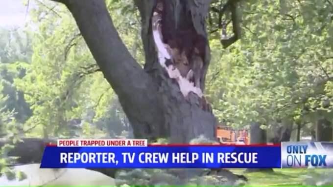 En stor gren föll från ett träd.