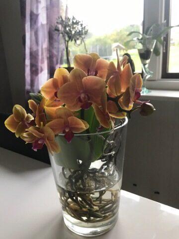 Blommor stod fel det far inte ske