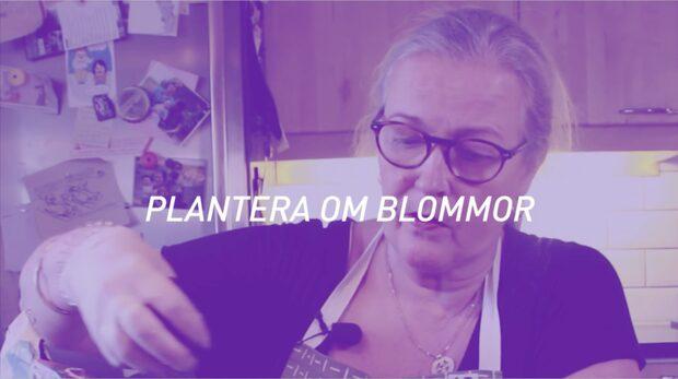 Karins Husmorsskola - Plantera om blommor