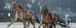 Slog bra hästar senast – kan absolut vinna igen