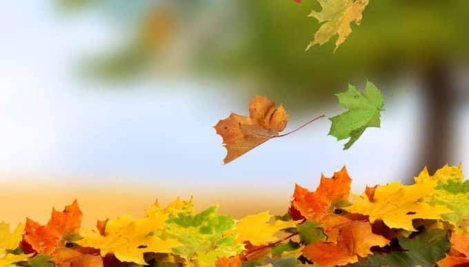 Efter de senaste dagarnas kyla så kommer afrikanska vindar att svepa över riket och göra hösten mild ytterligare ett slag.