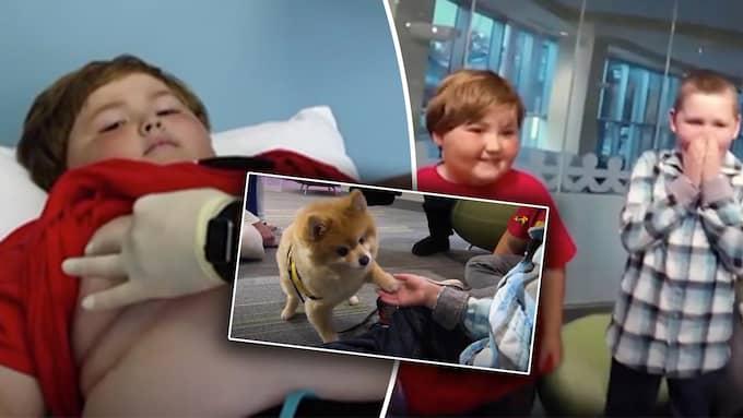 Hunden Swoosh får cancersjuka barn att le. Foto: CNN