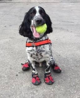 Nu berättar räddningstjänsten hur hundarna hjälpte till vid den tragiska branden. Foto: Twitter/Derbyshire FRS
