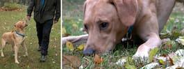 Här letar polishunden  Ace efter bloddroppar