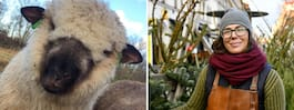 Klimatgranarna som  växer upp i fårhagen