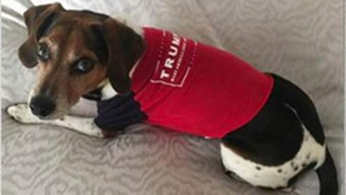 Hundtröja - Donald Trump vill att människans bästa vän ska prydas av hans budskap.