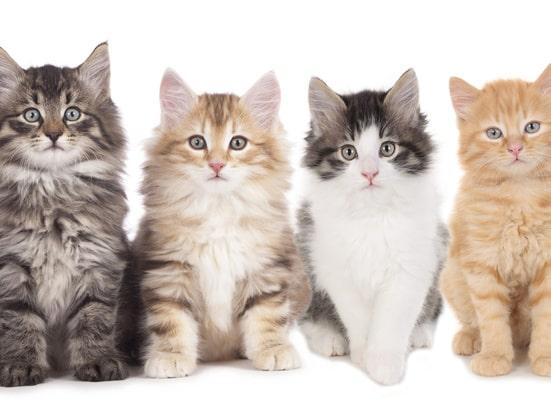 Din katt kan vara mer irriterad på dig än du tror.