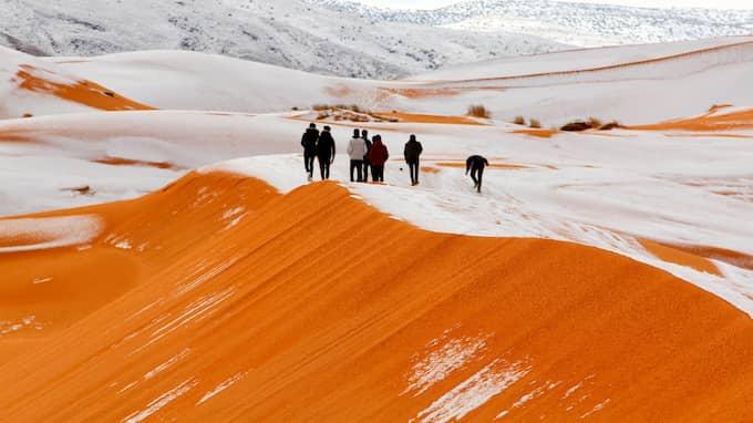 I den vanligtvis stekheta Saharaöknen slog ett lågtryck till med full kraft. Foto: REX/SHUTTERSTOCK