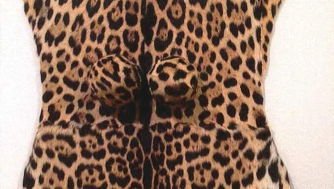 Leopardpälsen ingick i en utställning på Kulturhuset i Stockholm – men var troligen olaglig. Foto: Örjan Hallnäs Länsstyrelsen