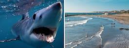 Världens snabbaste haj vid Gran Canarias stränder