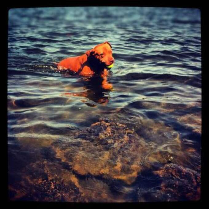 Hon älskar att simma och leka i vattnet, skriver ägaren i brevet.